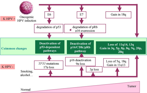hpv virus and head and neck cancer