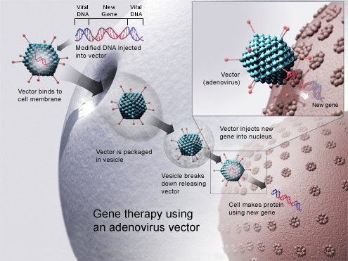cancer treatment genetic engineering hpv virus p3 kezelese