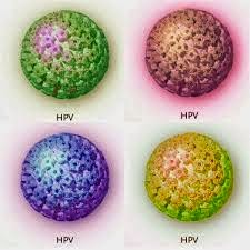 hpv virus krebs