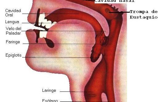 cancer endometrial grr