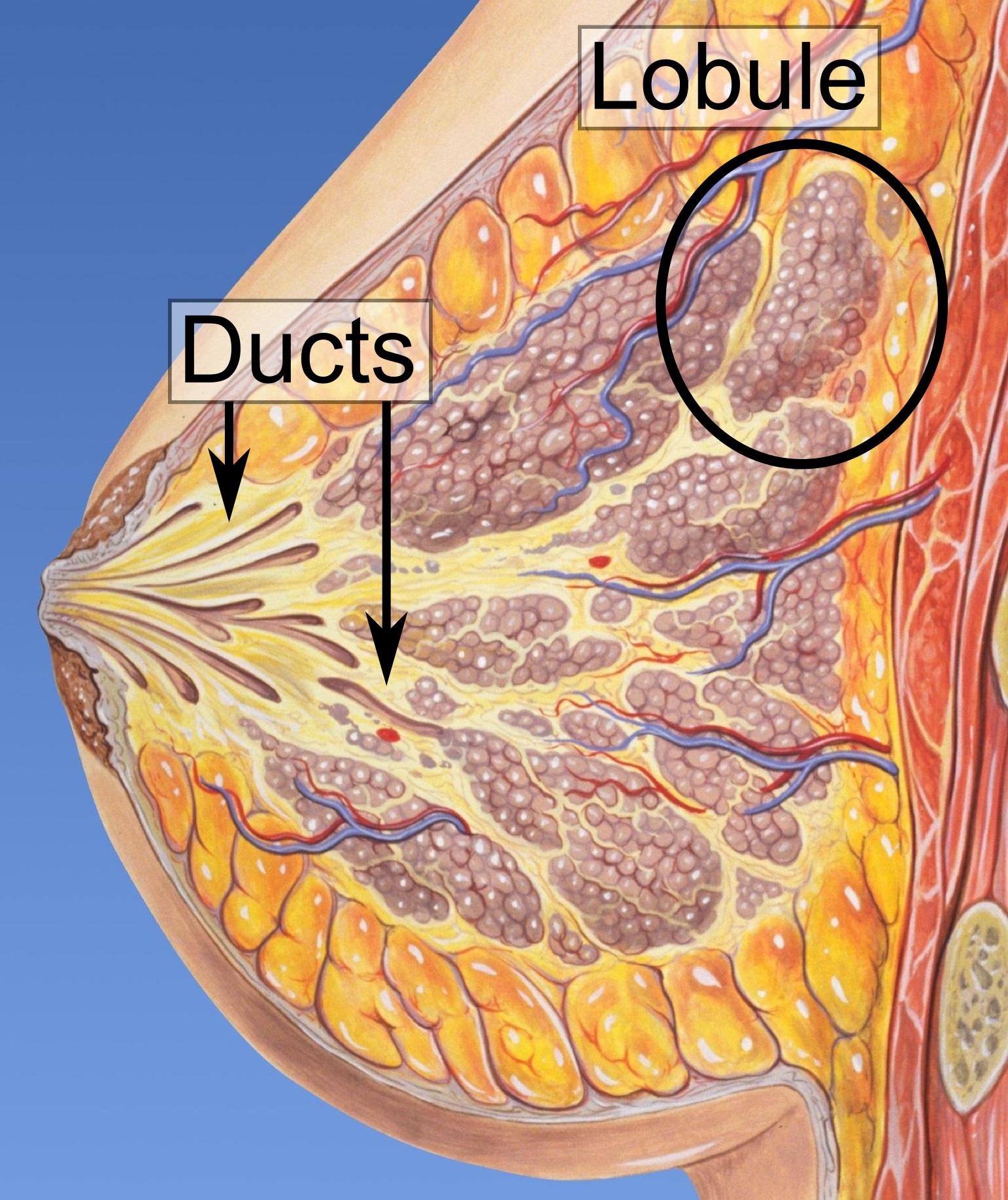 papillomatosis breast icd 10 que caracteristicas tiene un virus del papiloma humano