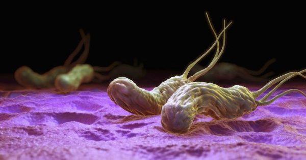 Rolul Pozitiv Si Negativ Al Bacteriilor in Viata Omului