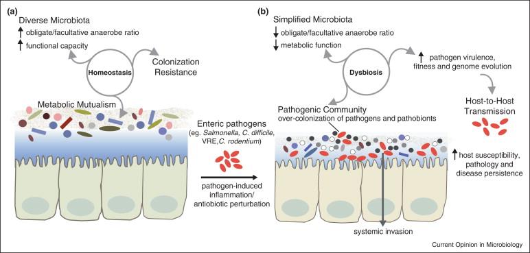 el virus del papiloma se cura wart on foot not going away