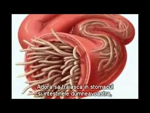 limbrici la adulti simptome