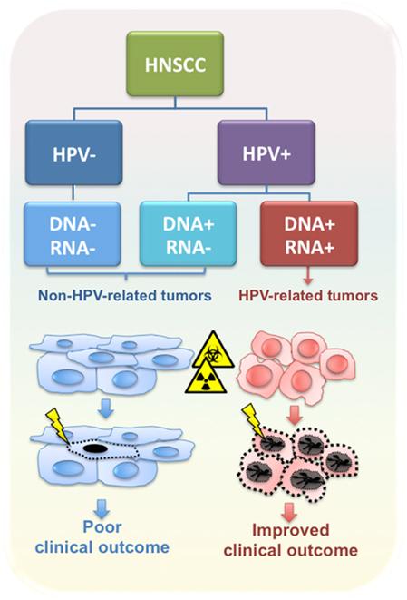 hpv cancer hals