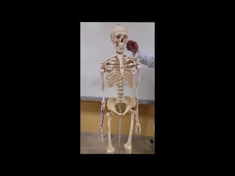 Carcinomul apendicular - simptome și tratament