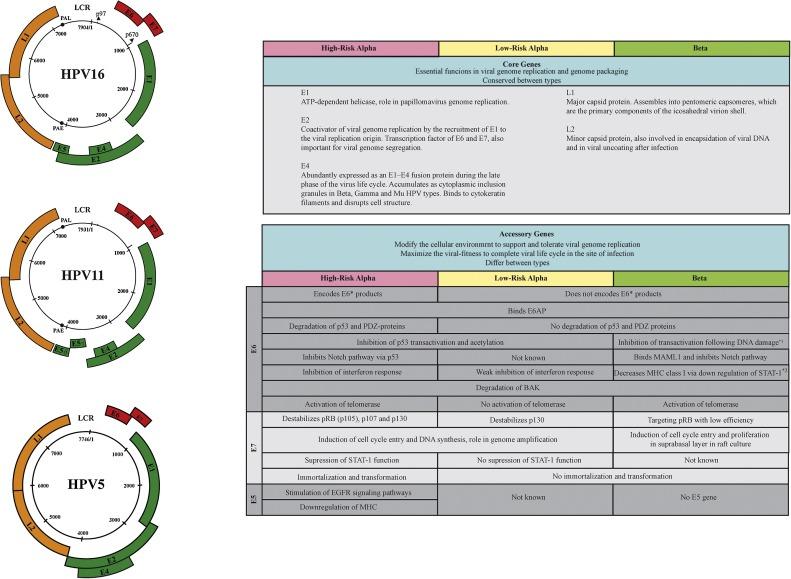 human papillomavirus in cervical specimens mebendazol para oxiuros