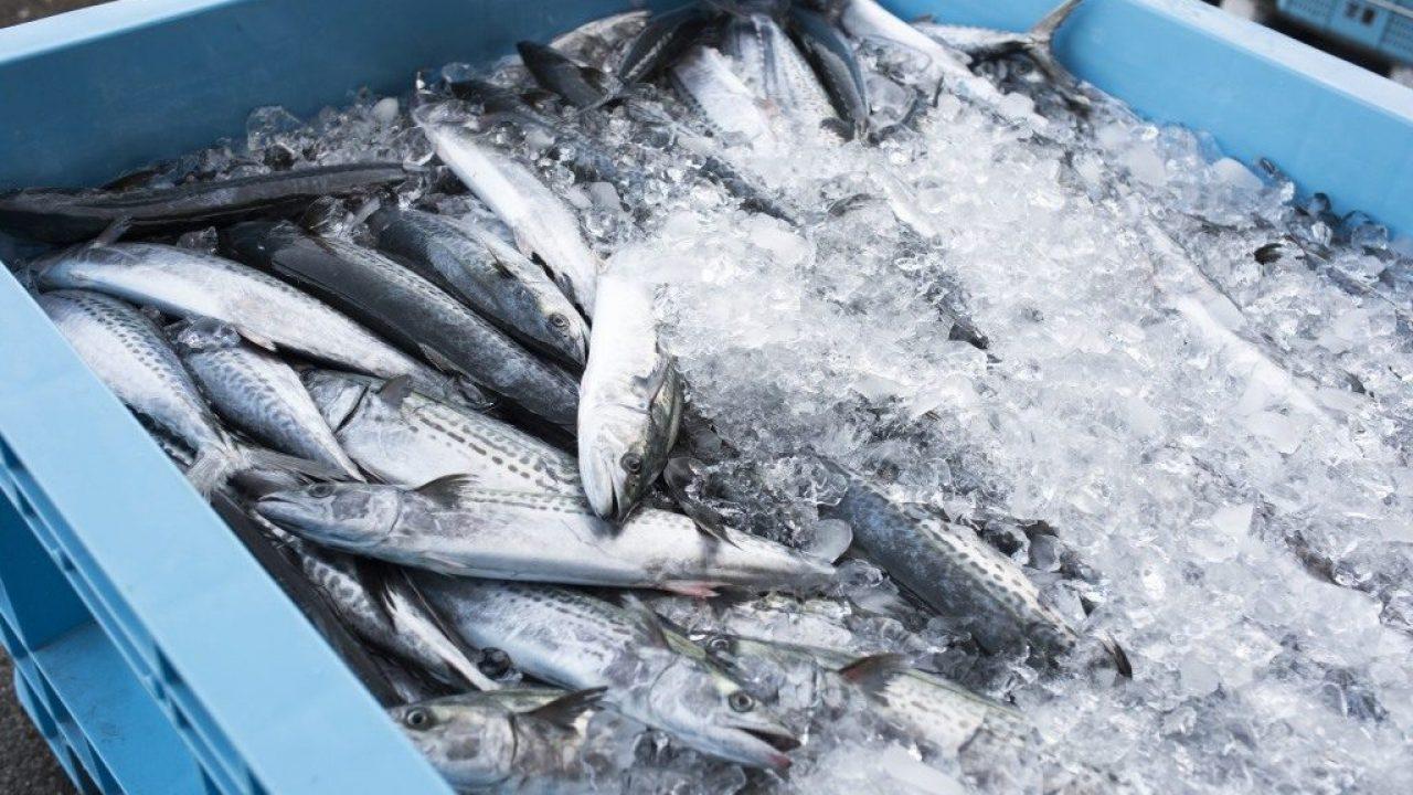 Peștele infestat cu paraziți poate fi vândut? Importatorii consideră că da - NewsMaker