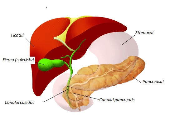 ÎN CINE LOVEȘTE cancerul de pancreas