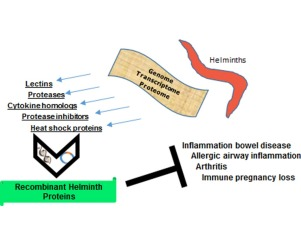 helminthic therapy inflammation cancer de laringe e faringe