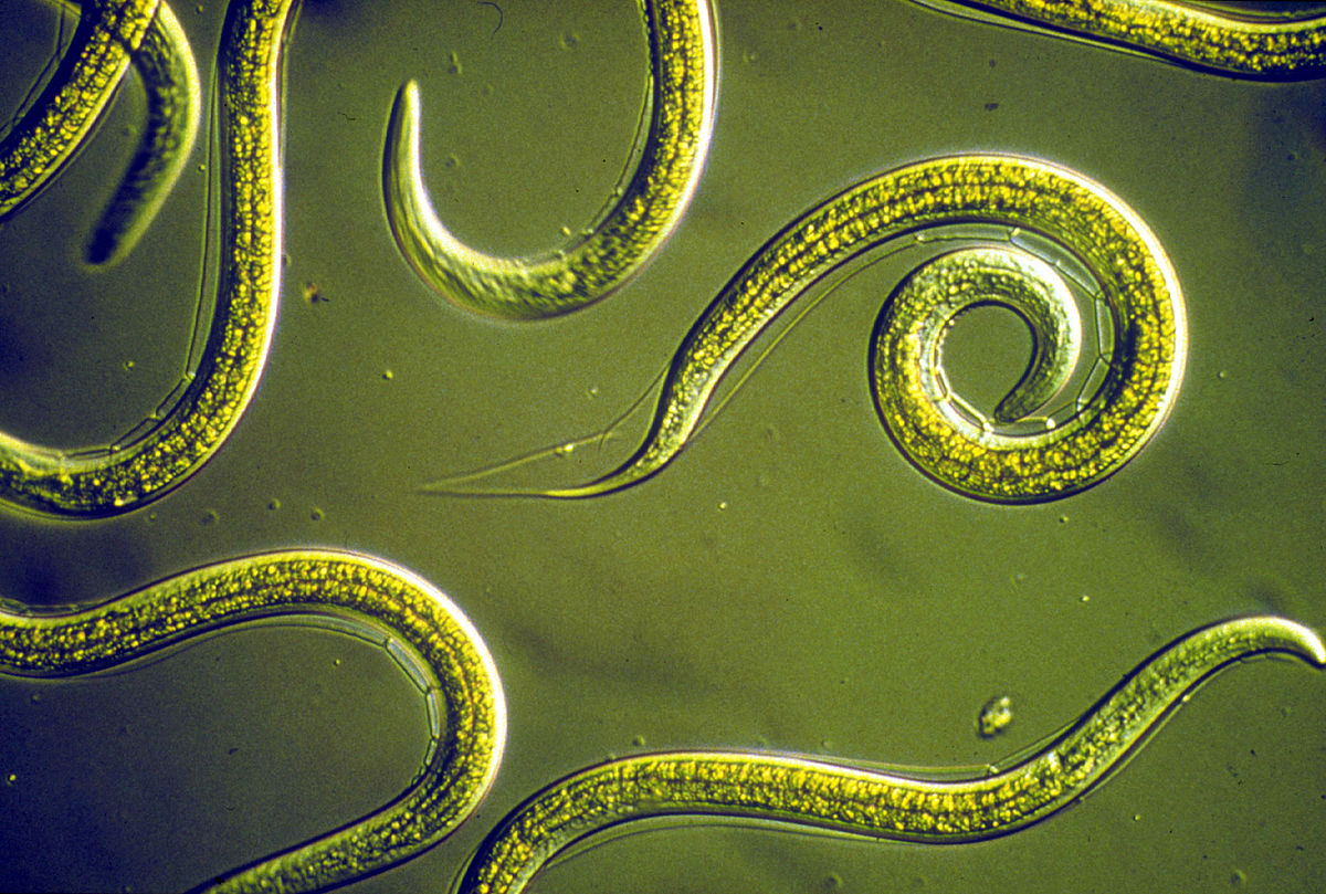 hpv sintomi bruciore squamous papilloma skin