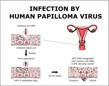 papilloma virus mode de transmission