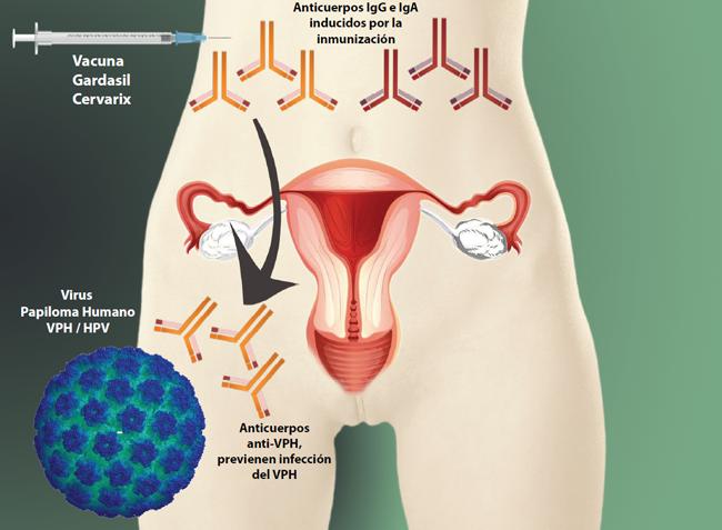 virus del papiloma humano vacuna colombia