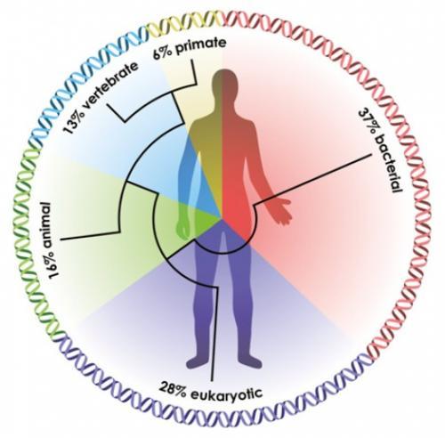 bacterii benefice omului cancer triplu negativ