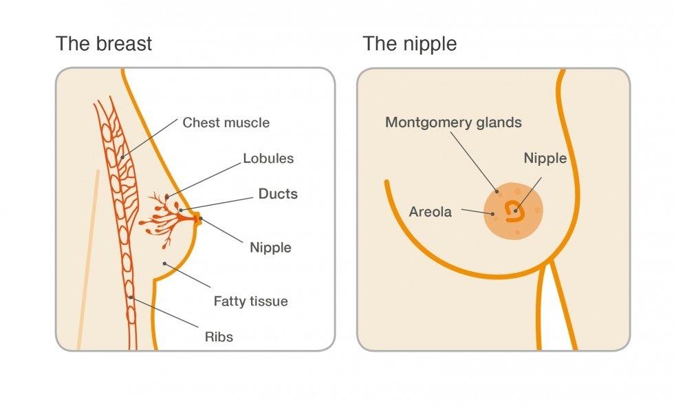 Curs de Obstetrică și Ginecologie (V. Tica)