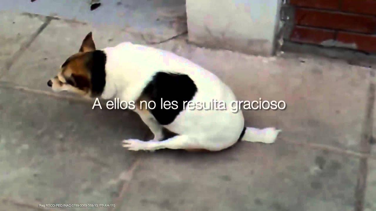 oxiuros y perros hpv uomo papilloma