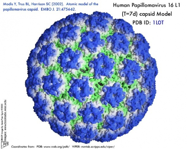 what is human papilloma virus (hpv)