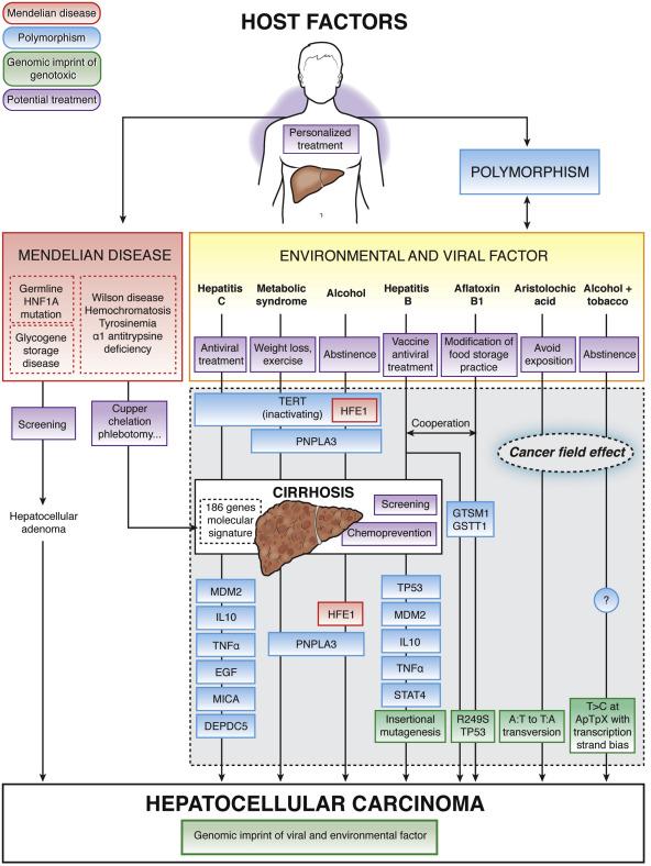 Hepatic cancer genes