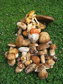 ciuperci galbene viermi rotunzi la om