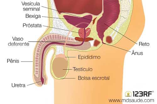 fibrocystic disease papilloma