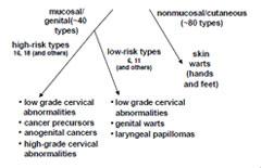 hpv types and symptoms zovirax papillomavirus
