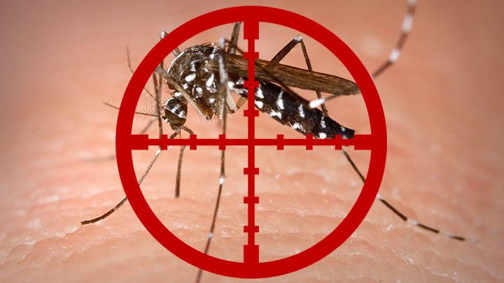 papilloma virus mortale