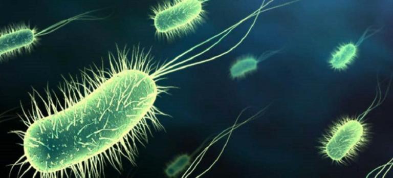 tipuri de bacterii
