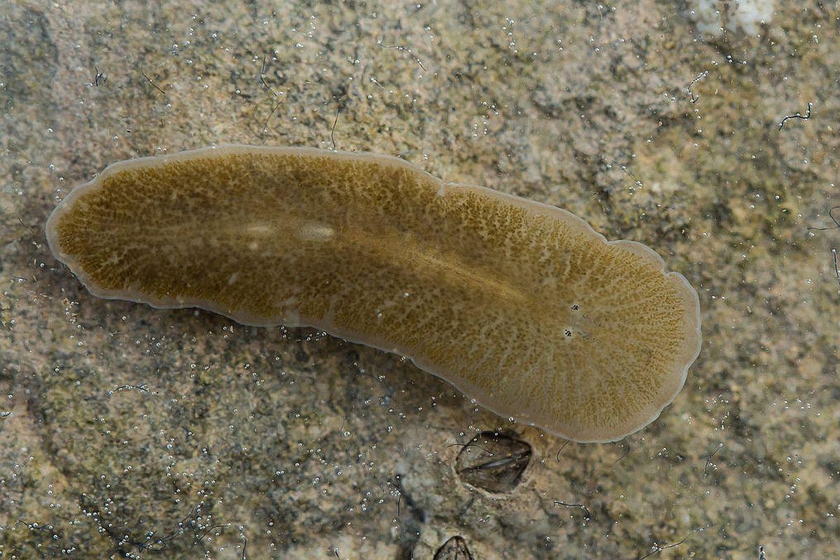 oul de viermi se maturizează tablete pentru toate tipurile de paraziți