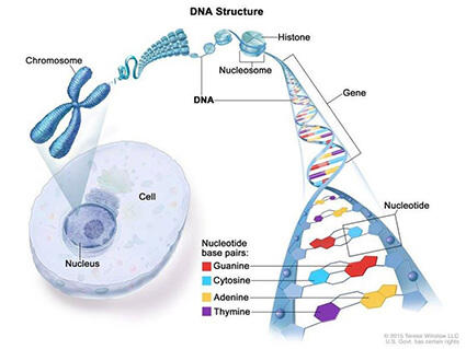 cancer is genetic because it is caused by changes in dna but not usually inherited