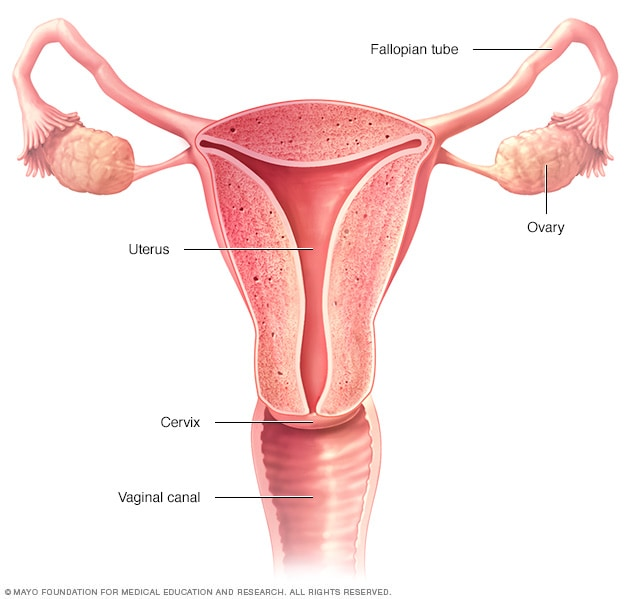 cancer ovarian prevent