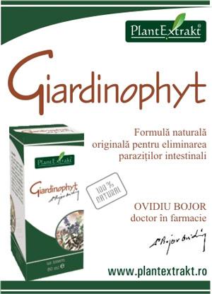 hpv essential oils humani papiloma virus hpv infekcija