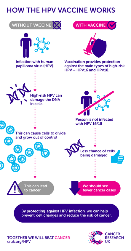 can hpv cause prostate cancer