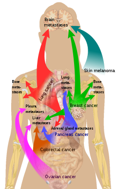 AJCC Cancer Staging Manual: Mahul B. Amin · | Books Express