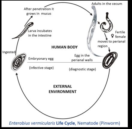 Ce este enterobioza