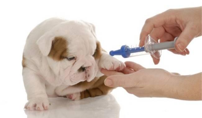 anemie u psa lecba detoxifiere la gravide