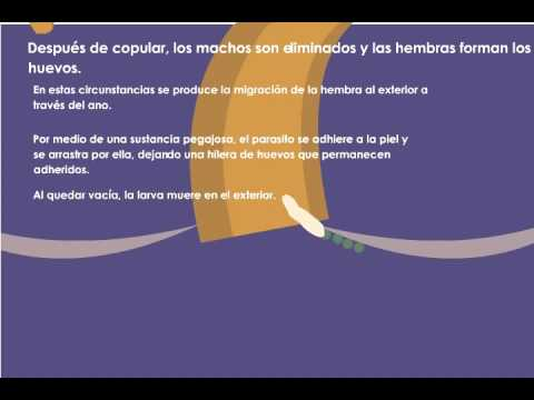 amoeba caracteristicas - Salud - leacurinaturiste.ro