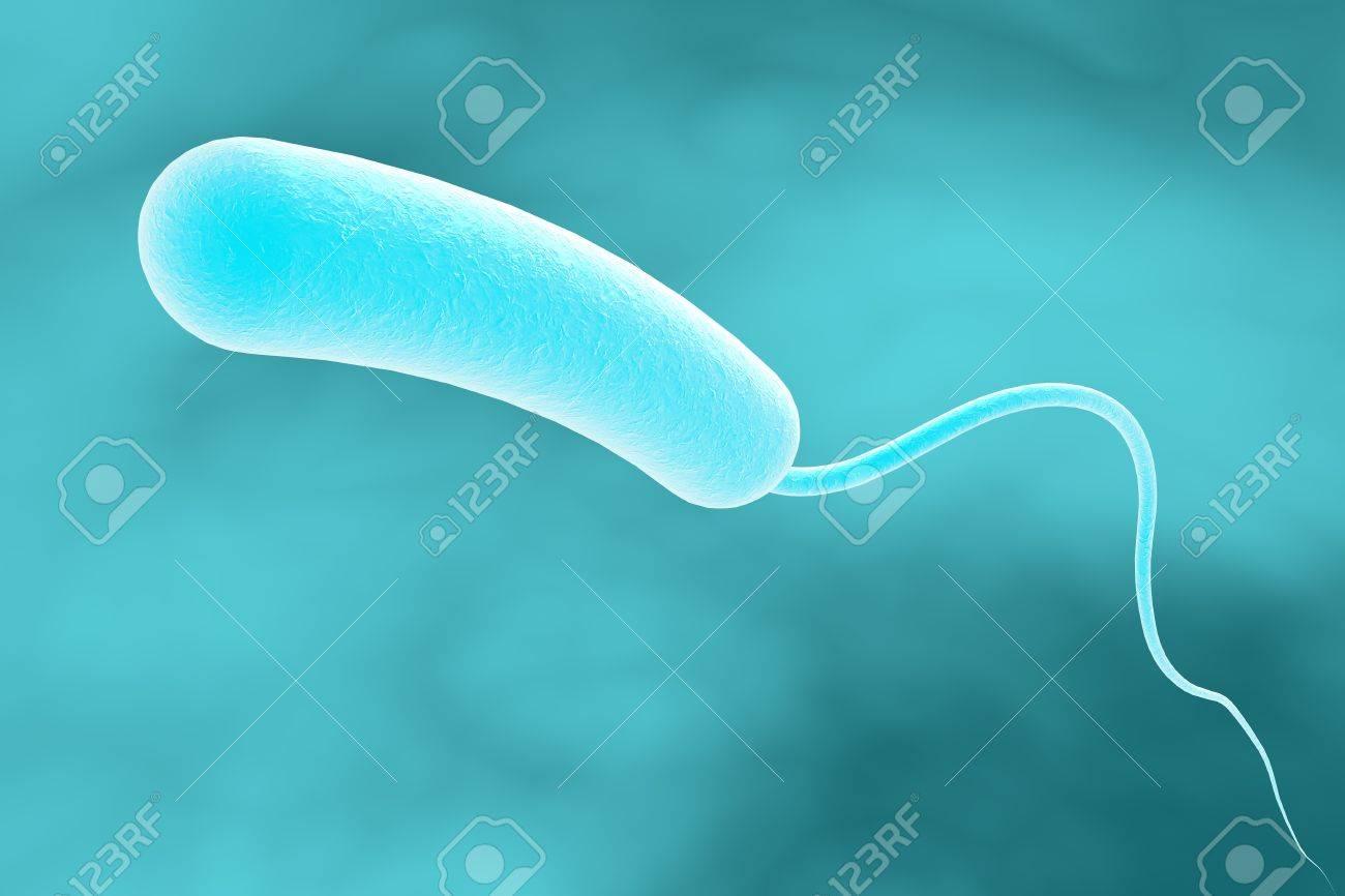 bacterie vibrio