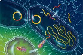 """Ce sunt probioticele. Bacterii """"bune"""" vs. bacterii """"rele"""""""