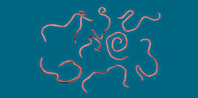 hpv testi nedir post operazione papillomavirus