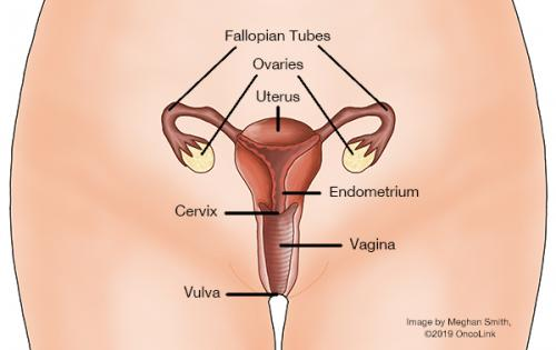 can hpv cause uterine cancer