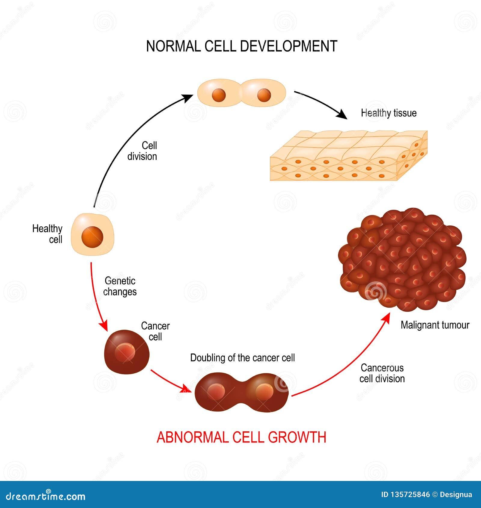 cancer cellule maligne