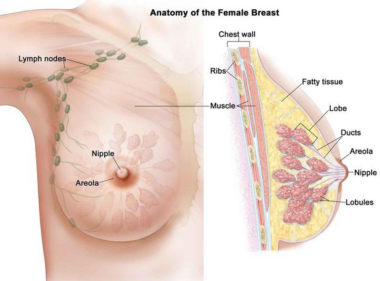 do breast papillomas grow