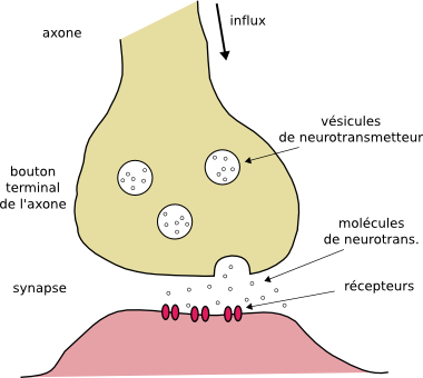 toxine musculaire