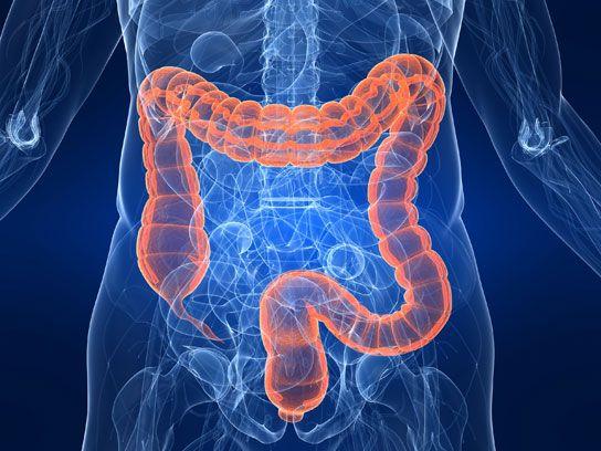 papilloma virus in human renal cancer risk stratification