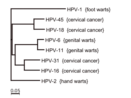 human papillomavirus type 16 and 18 cervical cancer