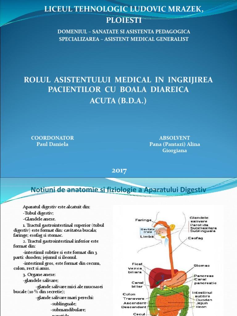 Anse intestinale