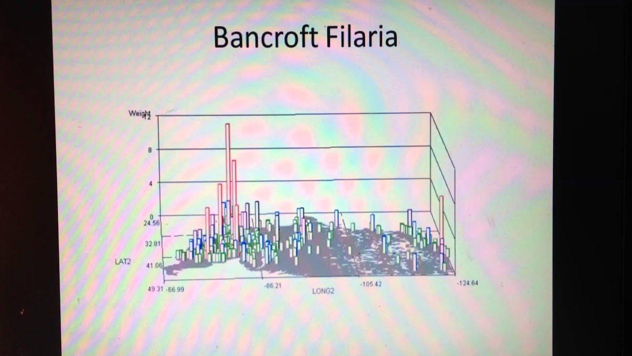 filaria bancroft