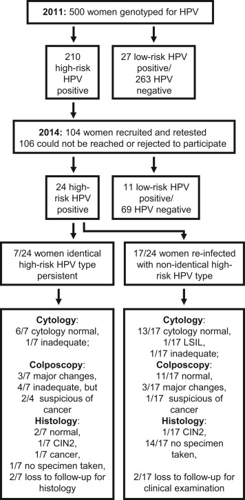 hpv high risk numbers