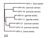 hpv types and symptoms