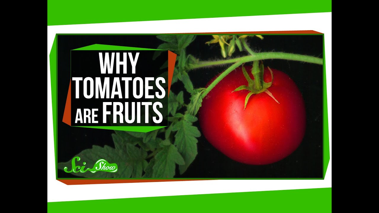 is tomato papilloma virus vie respiratorie